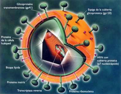 Sida | el VIH desapareció por completo en 2 casos