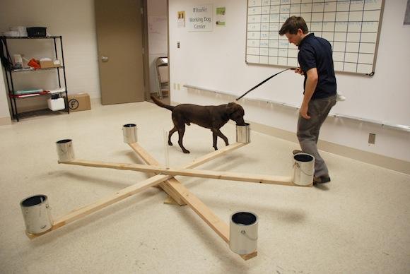 Perros para detectar el cancer