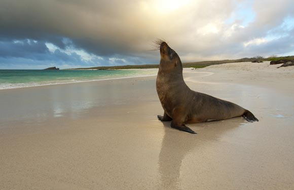 Increíbles fotografías de Vida salvaje, 13 imágenes