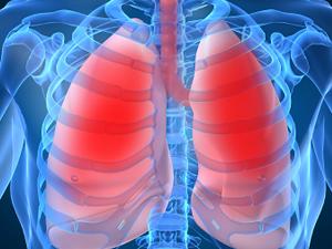 Investigan nuevas Celulas Madre alojadas en los pulmones